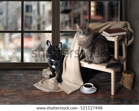 Comfortable room with panoramic window. Dog and cat sitting at the ladder, book, cup of coffee, plaid
