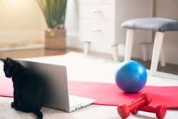 comfortable space for doing sport exercises, meditating, yoga equipment . Training at home concept. Pilates ball, yoga mat, dumbbell, laptop and a cat in the room