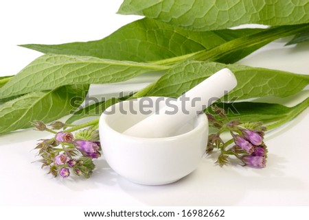 Comfrey plants with mortar on bright background