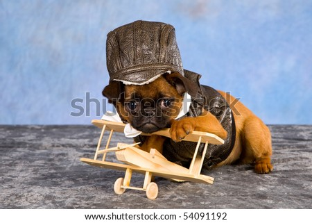 Comical Griffon puppy with leather jacket and cap with miniature wooden plane
