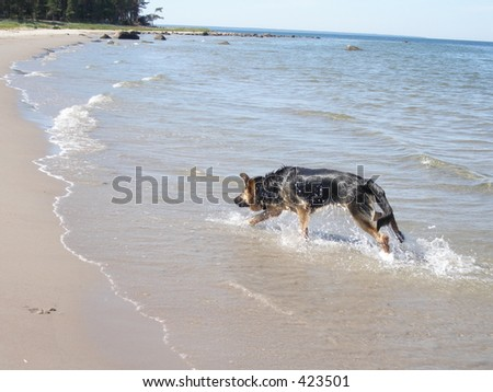 Coming from water - stock photo
