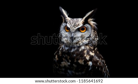 common barn head close up, The Owl sitting on a tree branch, A beautiful, huge European Eagle Owl flying, lovely Oriental Owl. Close up of a Barn Owl, high resolution photo