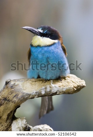 common bee-eater sitting on a tree branch