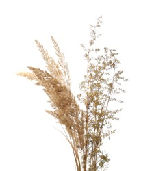 Common bulrush and yellow field flowers isolated on white background with clipping path