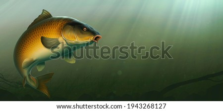 Common Carp fish (koi) realism isolate illustration. Fishing for big carp, feeder fishing, carp fishing. Carp underwater at the bottom of a river or lake.
