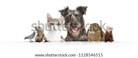 Common cute domestic animal pets hanging over a white horizontal website banner or social media cover #1128546515