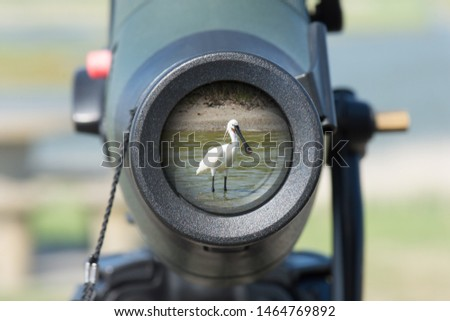 Common Eurasian spoonbill (Platalea leucorodia) in the lens of a spotting scope for birdwatching. Texel, netherlands