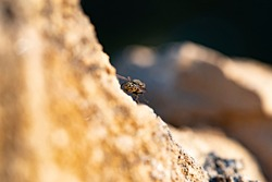 Common fly lying on its back on a sloping wall scanning the horizon on a sunset