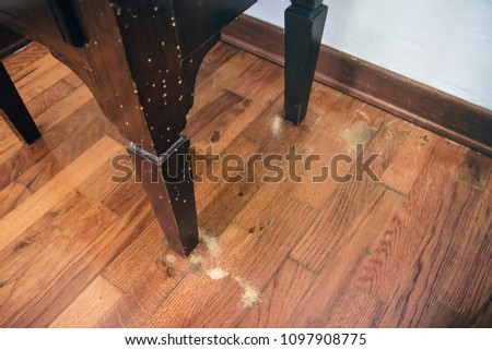Photo of  Common Furniture Beetle Damage, bedside table ruined by a house borer