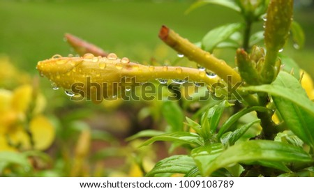 common garden flowers, closeup yellow and red flowers. water droplets on flowers and leafs,amazing bug on green leaf  #1009108789