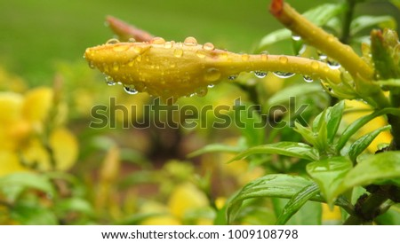 common garden flowers, closeup yellow and red flowers. water droplets on flowers and leafs,amazing bug on green leaf  #1009108798