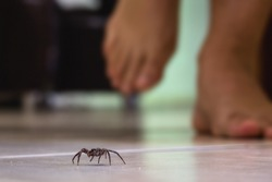 common house spider on a smooth tile floor seen from ground level in a floor in a residential home