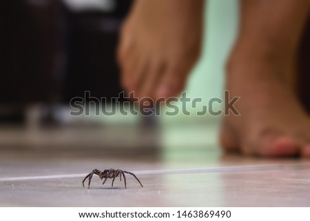 Photo of  common house spider on a smooth tile floor seen from ground level in a floor in a residential home
