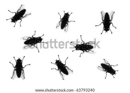 Common houseflies in various positions, silhouette isolated on white