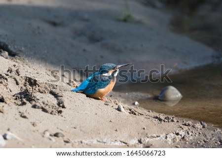 common kingfisher also known as the Eurasian kingfisher, and river kingfisher, is a small kingfisher with seven subspecies recognized within its wide distribution across Eurasia and North Africa.