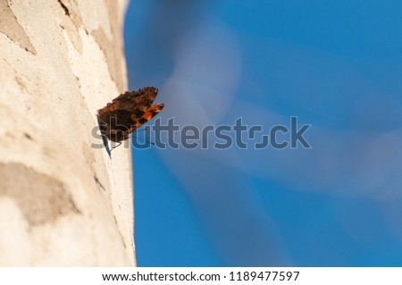 Common leopard butterfly sitting on sycamore tree trunk #1189477597