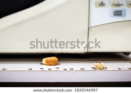 common red ants walking on food scraps near a microwave, uncontrolled insect pest problem inside the kitchen