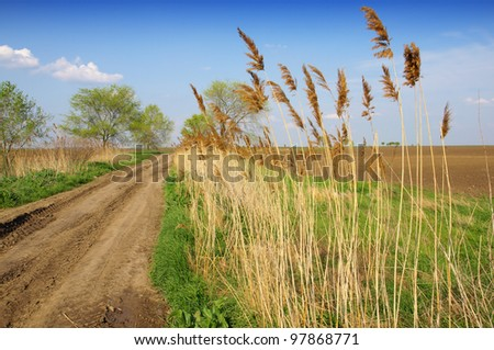 common reed and dirt road
