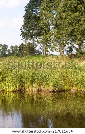 Common reed or Phragmites plants growing on the bank of a river and reflected in the smooth water surface.