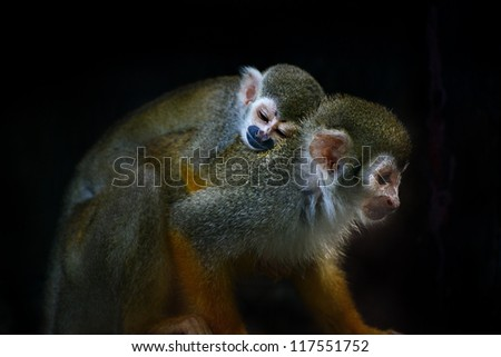 common squirrel monkey mother young baby