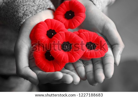 Commonwealth Countries, Remembrance Day, Veterans Day, Poppy Day, Armistice Day Сток-фото ©