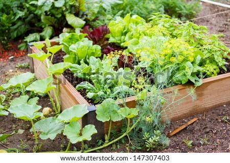 Community gardening in urban community.