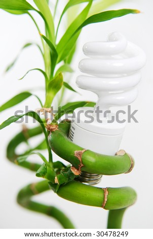 Compact Fluorescent Bulb with Bamboo - stock photo