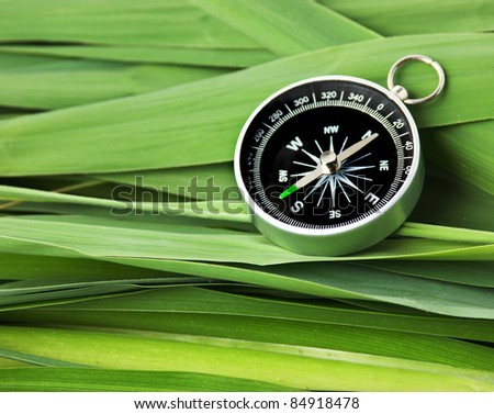 compass on the leaves of cane