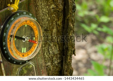 compass to determine the direction of the world hanging on the trunk of a forest tree concept of sports orientation and hiking #1443434465