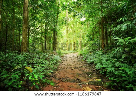 Competition of forest trees To sunlight necessary to sustain life.  #1186179847