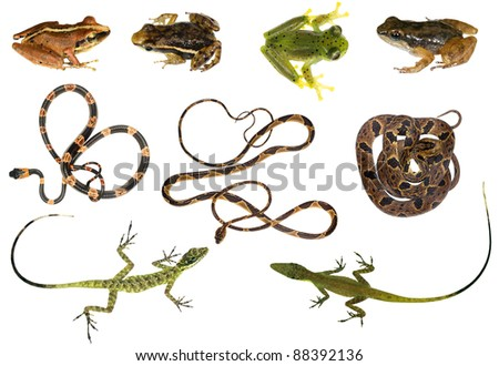 Compilation of reptiles and amphibians from north-western Ecuador