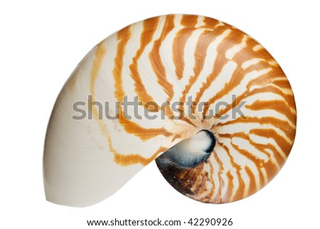 Complete Nautilus Shell - stock photo