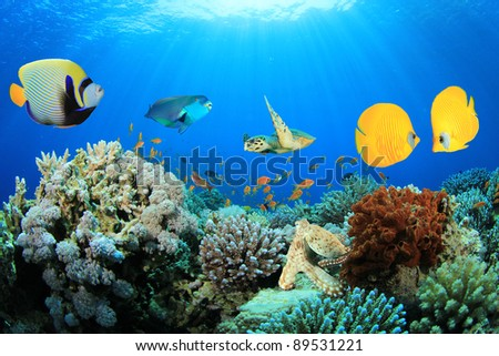 How much do angelfish cost for How much do fish cost
