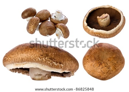 Composite of a large portobello mushroom and several smaller ones against a white background.