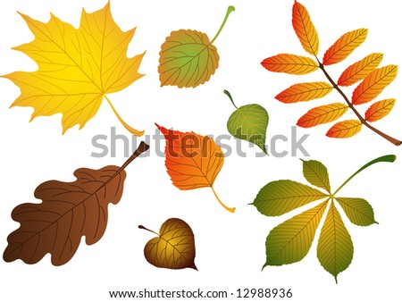 "Composite of various autumn leaves: birch, maple, oak, rowan, lime, chestnut, poplar, aspen. Vector version of this image (""*.eps"") also available in my portfolio."