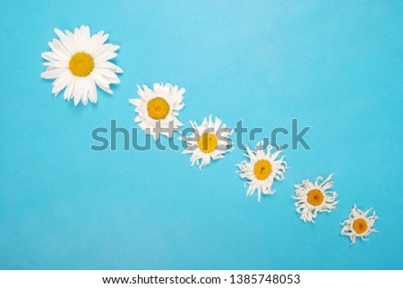 Composition chamomiles flowers on color paper background. Copy space template for postcard, lettering, text or your design. Flat lay Top view Concept Hello summer.  #1385748053