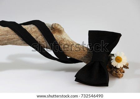 Composition: Extravagant black official classic bow tie, small chrysanthemum flower similar to chamomile and wooden stick curve on a white background. #732546490