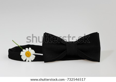 Composition: Extravagant black official classic bow tie, small chrysanthemum flower similar to chamomile on a white background. #732546517