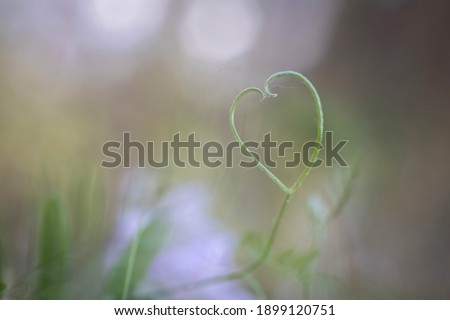 Photo of  Composition from flowers. Arrow of Amour in heart