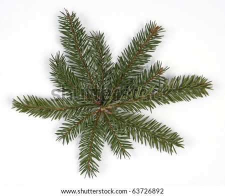 Composition from spruce twigs on the white background