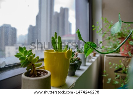 Composition green plant succulent plant potted plant