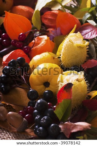 Composition of autumn leaves and wild forest fruits