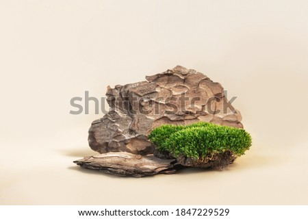 Composition of bark tree and moss on pastel background. Abstract podium for organic cosmetic products. Natural stand for presentation and exhibitions.