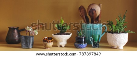 composition of cacti and succulents in ceramic pots of chamotte in the kitchen on a shelf  #787897849