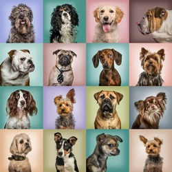 Composition of dogs against colored backgrounds