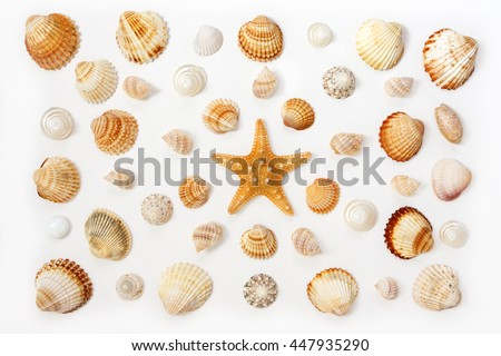 composition of exotic sea shells and starfish on a white background. top view.