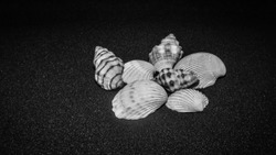 composition of exotic sea shells on plain  black background and shell picked from beach sea life