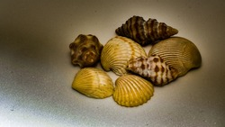 composition of exotic sea shells on plain  dark background and shell picked from beach sea life