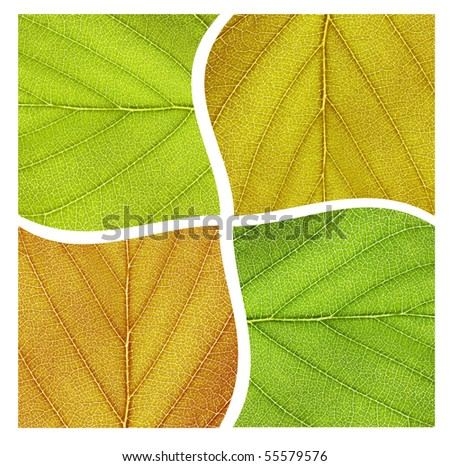 Composition of four different colored leaves representing the four seasons