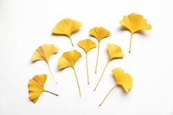 Composition of golden decorative beautiful dry Ginkgo leaves on white background. Flat lay, top view minimal neutral floral arrangement. Ginkgo biloba.
